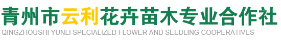 青州市云利花卉苗木专业合作社