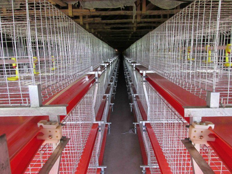 肉鸡养殖鸡笼