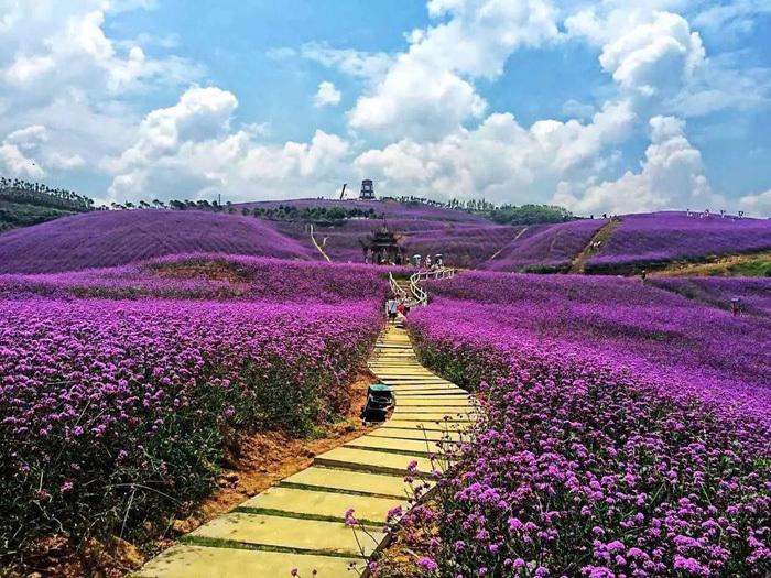 青州市溢洲花卉苗木有限公司